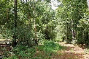 81 Acre Recreational/Timberland Tract in San Jacinto, TX (14 of 21)