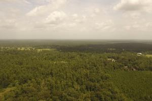 81 Acre Recreational/Timberland Tract in San Jacinto, TX (3 of 21)