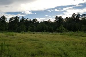 81 Acre Recreational/Timberland Tract in San Jacinto, TX (18 of 21)