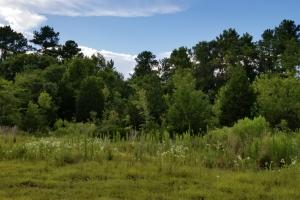 81 Acre Recreational/Timberland Tract in San Jacinto, TX (19 of 21)