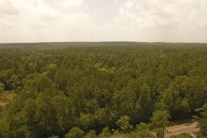81 Acre Recreational/Timberland Tract in San Jacinto, TX (2 of 21)