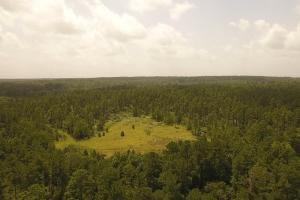 81 Acre Recreational/Timberland Tract - San Jacinto County TX