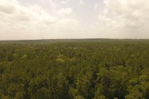 81 Acre Recreational/Timberland Tract in San Jacinto, TX (5 of 21)