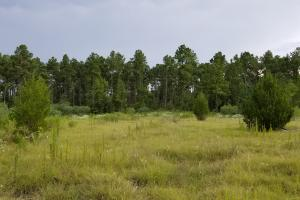 81 Acre Recreational/Timberland Tract in San Jacinto, TX (8 of 21)