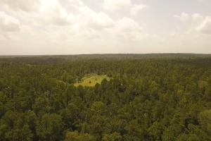 81 Acre Recreational/Timberland Tract in San Jacinto, TX (4 of 21)