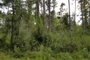 81 Acre Recreational/Timberland Tract in San Jacinto, TX (12 of 21)