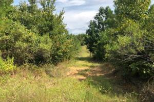115 ac. Hunting / Timberland Property near Duck Hill, MS in Montgomery, MS (8 of 28)