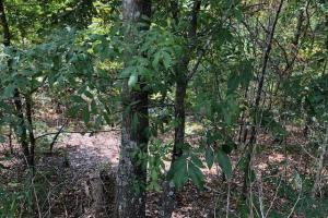 115 ac. Hunting / Timberland Property near Duck Hill, MS in Montgomery, MS (5 of 28)