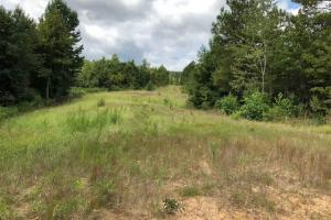 115 ac. Hunting / Timberland Property near Duck Hill, MS in Montgomery, MS (22 of 28)