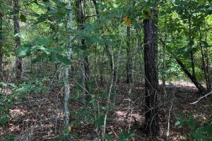 115 ac. Hunting / Timberland Property near Duck Hill, MS in Montgomery, MS (13 of 28)