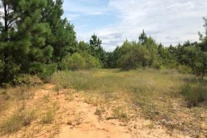 115 ac. Hunting / Timberland Property near Duck Hill, MS in Montgomery, MS (7 of 28)