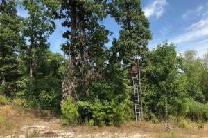 115 ac. Hunting / Timberland Property near Duck Hill, MS in Montgomery, MS (2 of 28)