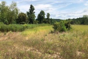 115 ac. Hunting / Timberland Property near Duck Hill, MS in Montgomery, MS (9 of 28)