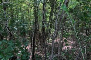 115 ac. Hunting / Timberland Property near Duck Hill, MS in Montgomery, MS (25 of 28)