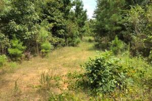 115 ac. Hunting / Timberland Property near Duck Hill, MS in Montgomery, MS (17 of 28)
