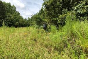 115 ac. Hunting / Timberland Property near Duck Hill, MS in Montgomery, MS (6 of 28)