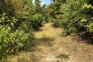 115 ac. Hunting / Timberland Property near Duck Hill, MS in Montgomery, MS (12 of 28)