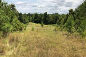 115 ac. Hunting / Timberland Property near Duck Hill, MS in Montgomery, MS (20 of 28)
