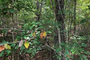 115 ac. Hunting / Timberland Property near Duck Hill, MS in Montgomery, MS (14 of 28)