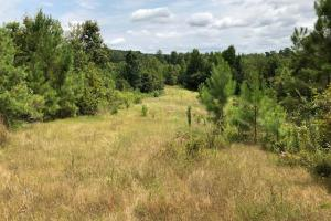 115 ac. Hunting / Timberland Property near Duck Hill, MS in Montgomery, MS (18 of 28)