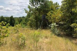 115 ac. Hunting / Timberland Property near Duck Hill, MS in Montgomery, MS (19 of 28)