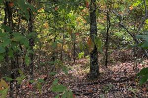 115 ac. Hunting / Timberland Property near Duck Hill, MS in Montgomery, MS (27 of 28)