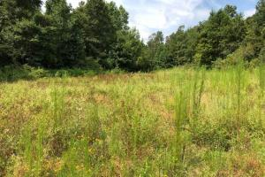 115 ac. Hunting / Timberland Property near Duck Hill, MS in Montgomery, MS (11 of 28)