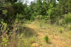 115 ac. Hunting / Timberland Property near Duck Hill, MS in Montgomery, MS (15 of 28)