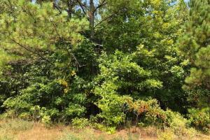 115 ac. Hunting / Timberland Property near Duck Hill, MS in Montgomery, MS (23 of 28)