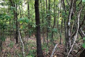 115 ac. Hunting / Timberland Property near Duck Hill, MS in Montgomery, MS (24 of 28)