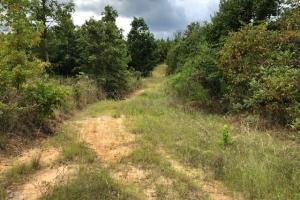 115 ac. Hunting / Timberland Property near Duck Hill, MS in Montgomery, MS (28 of 28)