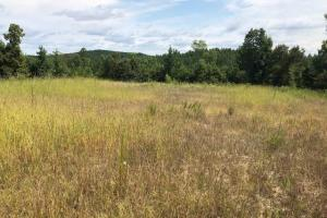 115 ac. Hunting / Timberland Property near Duck Hill, MS in Montgomery, MS (10 of 28)