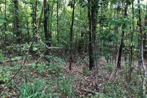 115 ac. Hunting / Timberland Property near Duck Hill, MS in Montgomery, MS (21 of 28)