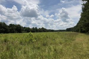 Recreational Tract & Timber Land - Attala County MS
