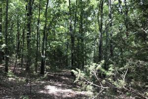 250 Acres Recreational Land near the Buffalo River in Searcy, AR (43 of 48)