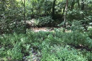250 Acres Recreational Land near the Buffalo River in Searcy, AR (30 of 48)