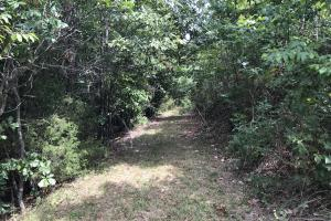 250 Acres Recreational Land near the Buffalo River in Searcy, AR (13 of 48)
