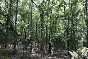 250 Acres Recreational Land near the Buffalo River in Searcy, AR (17 of 48)