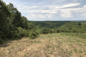 250 Acres Recreational Land near the Buffalo River in Searcy, AR (4 of 48)