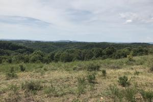250 Acres Recreational Land near the Buffalo River in Searcy, AR (37 of 48)