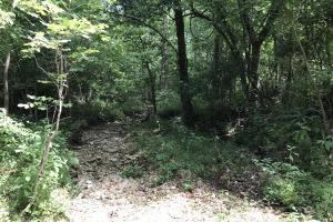 250 Acres Recreational Land near the Buffalo River in Searcy, AR (29 of 48)