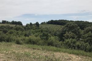 250 Acres Recreational Land near the Buffalo River in Searcy, AR (35 of 48)