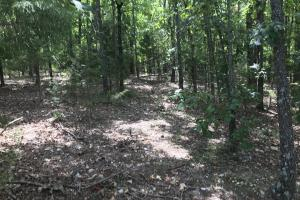 250 Acres Recreational Land near the Buffalo River in Searcy, AR (42 of 48)