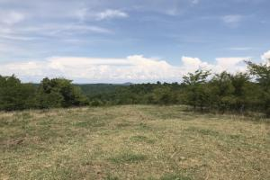 250 Acres Recreational Land near the Buffalo River in Searcy, AR (19 of 48)