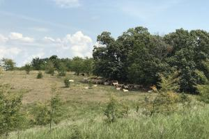 250 Acres Recreational Land near the Buffalo River in Searcy, AR (7 of 48)