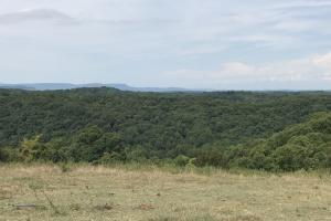 250 Acres Recreational Land near the Buffalo River in Searcy, AR (6 of 48)