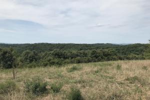 250 Acres Recreational Land near the Buffalo River in Searcy, AR (5 of 48)