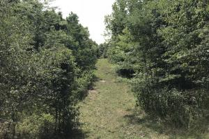 250 Acres Recreational Land near the Buffalo River in Searcy, AR (28 of 48)