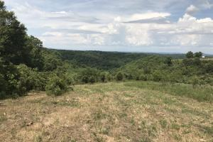 250 Acres Recreational Land near the Buffalo River in Searcy, AR (36 of 48)