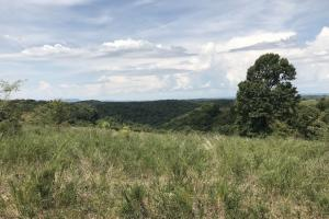 250 Acres Recreational Land near the Buffalo River in Searcy, AR (41 of 48)